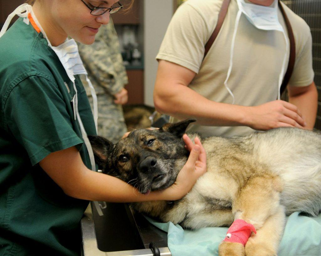 Intervention vétérinaire
